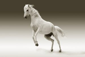 What is Horse Insurance ?