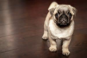 Why Purchase Pet Insurance ?